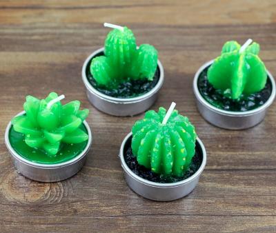 Sveća kaktus